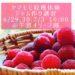 2019.6.29&30&7.3【ヤマモモ収獲体験&ヤマモモジュース、ジャム作り講習】