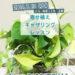 2019.7.13【寄せ植えギャザリングレッスン『室内で楽しむグリーンインテリア』】